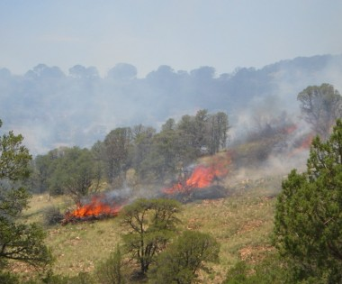 Multiagency Cooperative Burning in the WUI