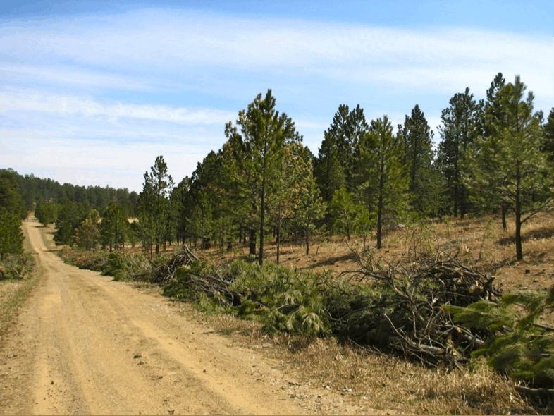 Roan Mountain Road