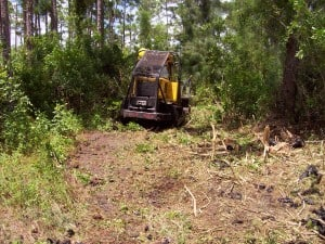The Florida Forest Service positrack mulching vegetation. Photo Credit: Florida Forest Service
