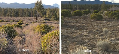 Before and after photos in the 43-acre easement. Photo credit: Allison Green
