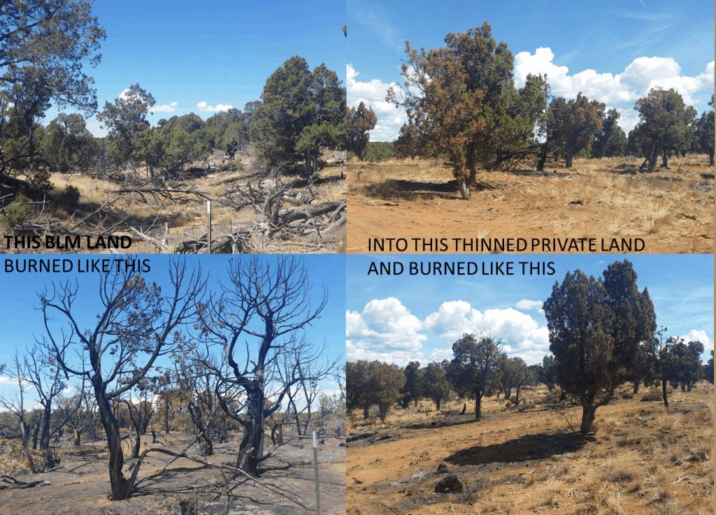 Kernan Fire, Montezuma County , CO. August 18th, 2015. Photos courtesy of the Tres Rios BLM Office.