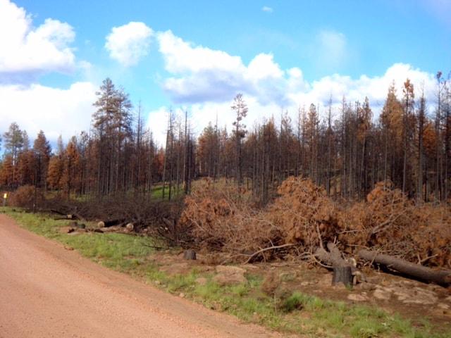 wallow wildfire arizona