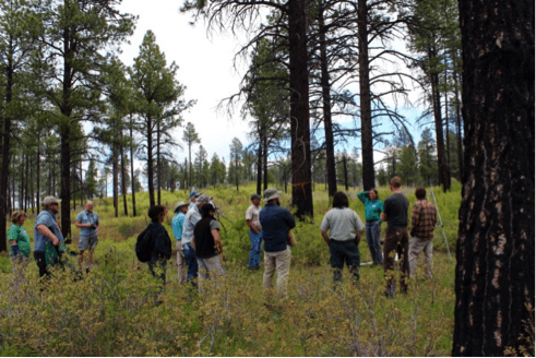 Members of the DWaRF collaborative examine a 15-year old Ponderosa Pine Partnership restoration site. Photo courtesy of Thurman Wilson