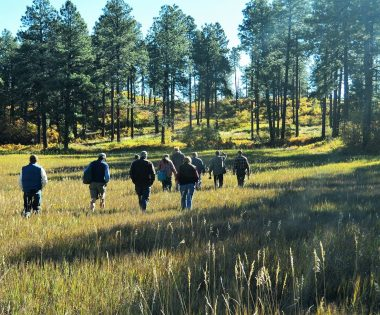 Discussing the Future of Ponderosa Pine and the Timber Economy in Southwest Colorado