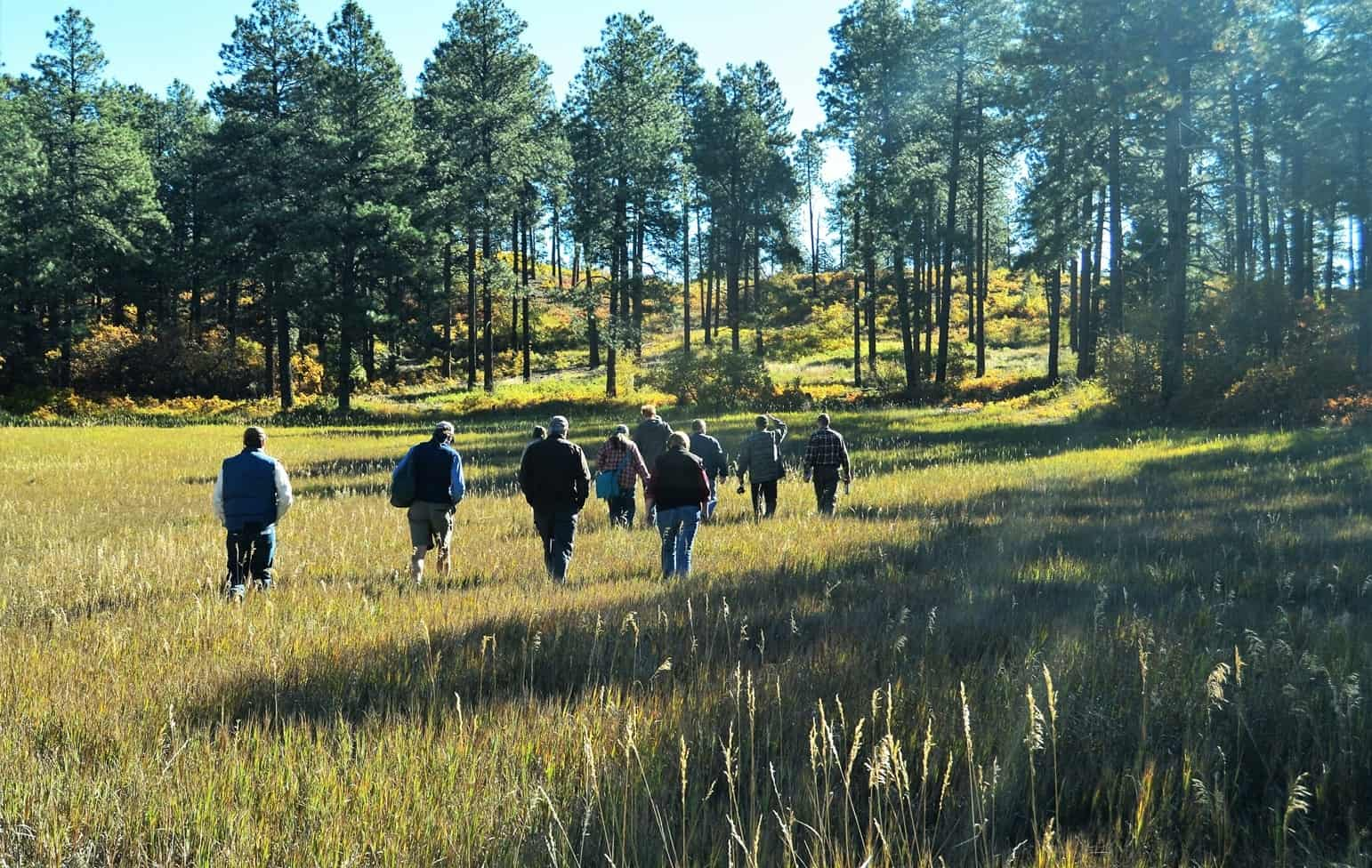 Group participants walking through a field towards a forest stand.