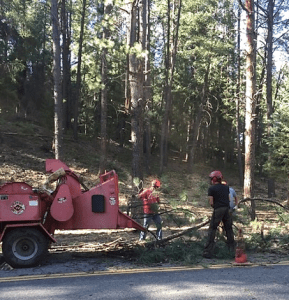 Trees removed as part of the wildfire mitigation project being loaded into a chipper.