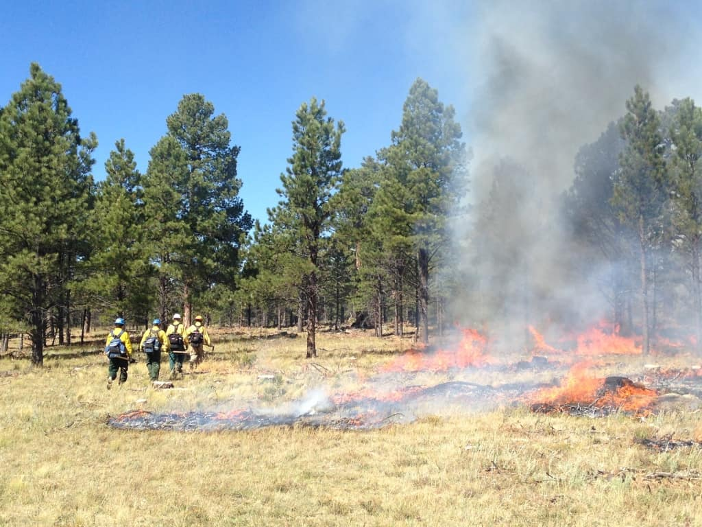 Firefighters working on the collaborative controlled burn walking back into the forest.