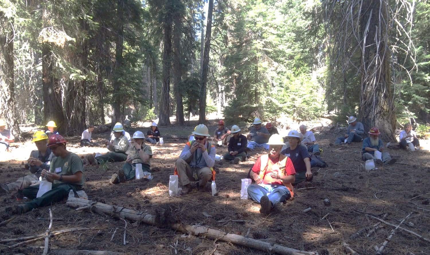 Workshop participants eating sack lunches in the forest.