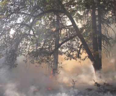Science Tuesday: Fire History is Human History