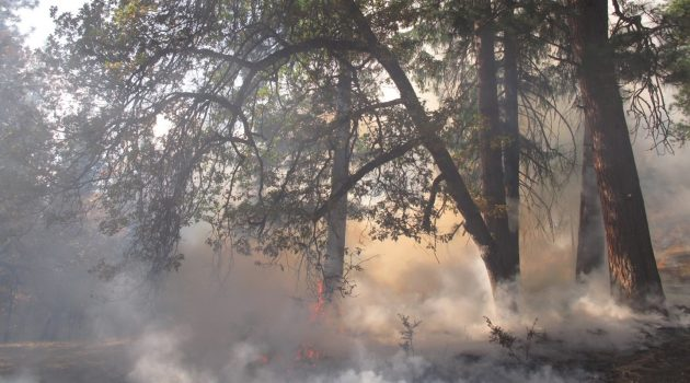 Картинки на тему защита природы от огня