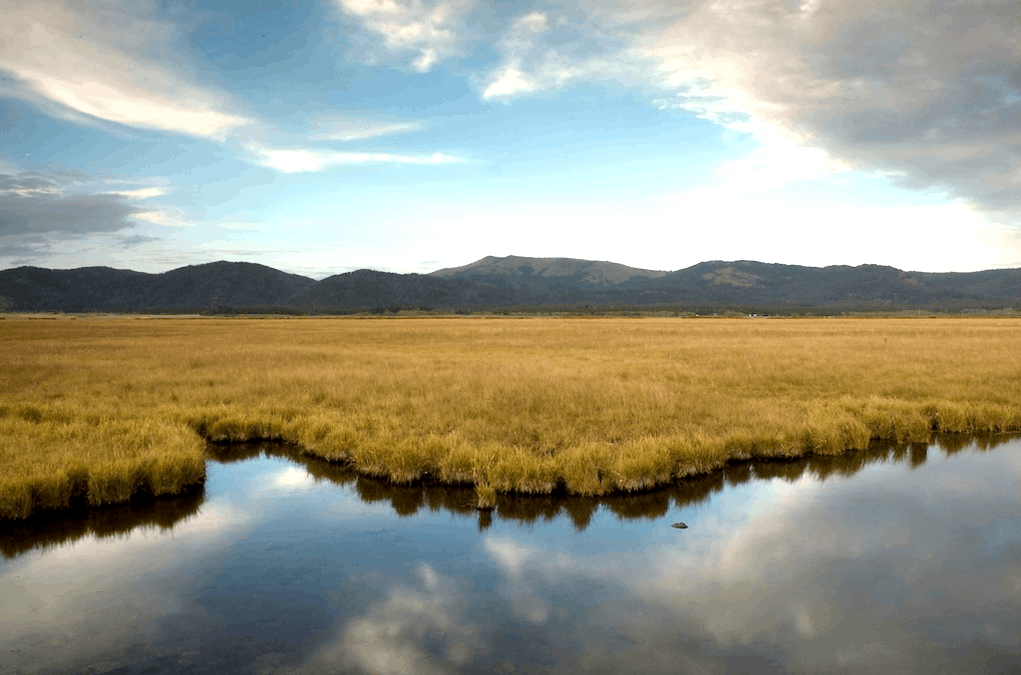 Landscape shot of a wetland on the ranch.