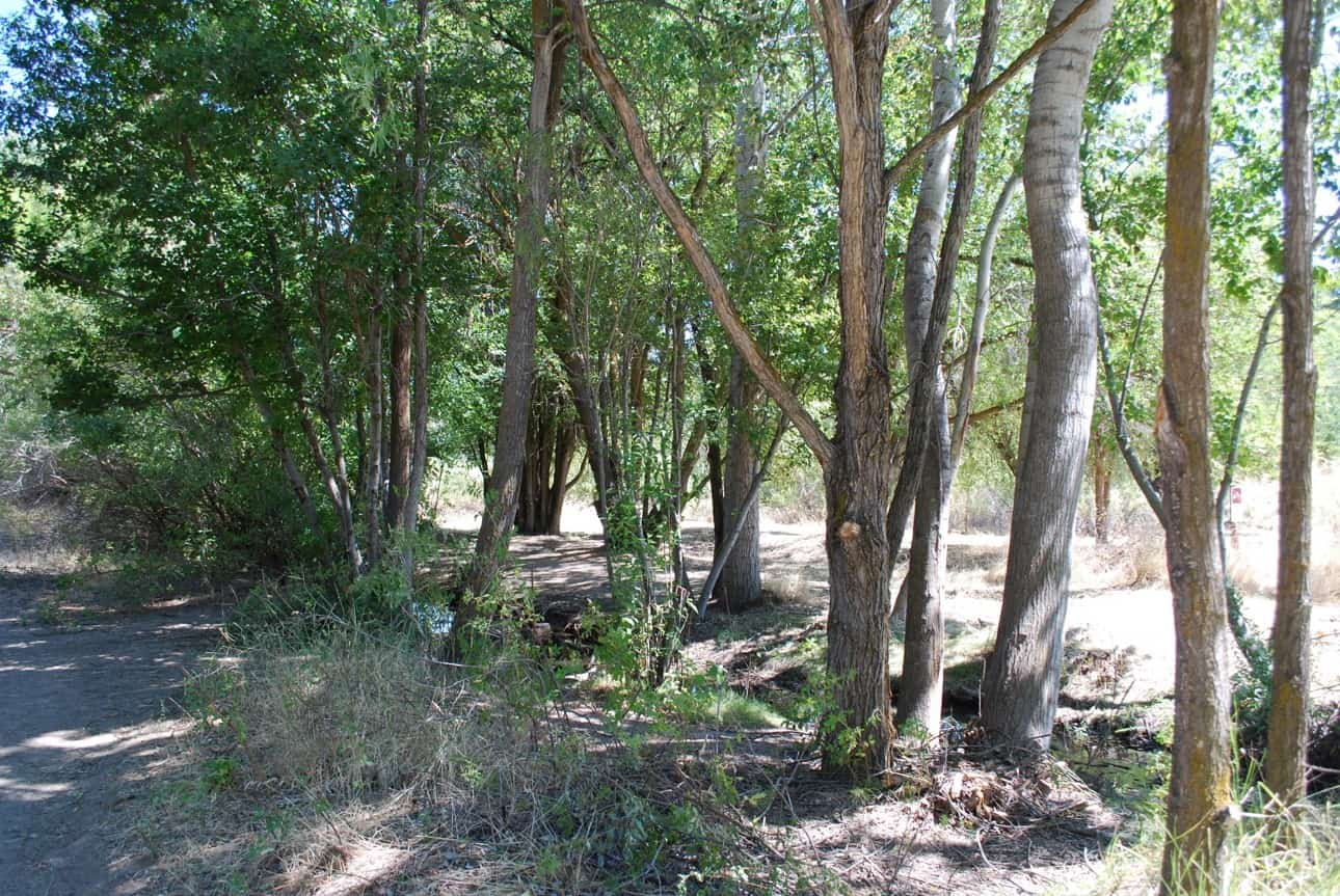 Forest thinning project near recreation trail