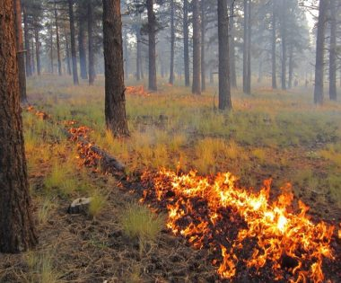 Science Tuesday: What's Your State's Prescribed Fire Liability Law?