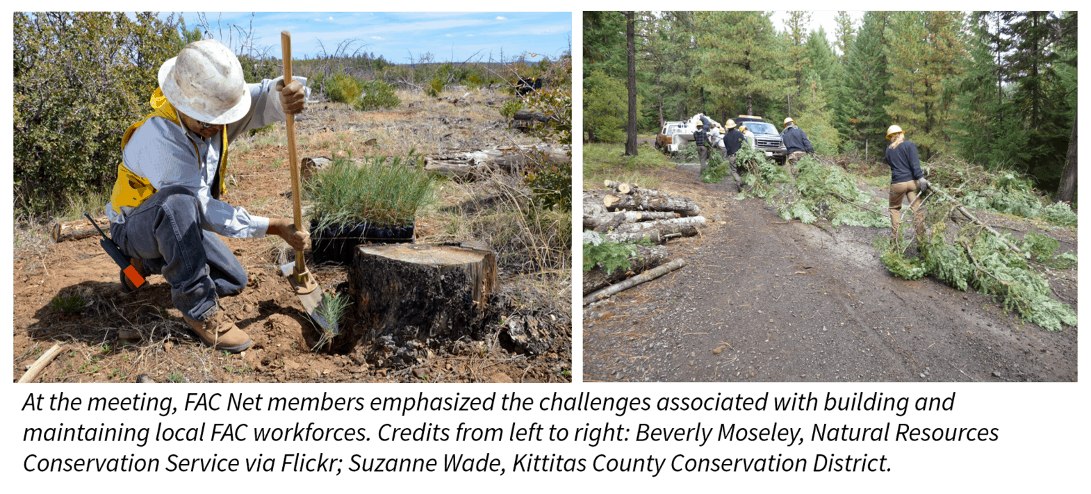 Two images of FAC work underway. On the left, a restoration worker planting pine saplings after a fire. On the right, a community removing excess fuels from the forest. Text below images reads: At the meeting, FAC Net members emphasized the challenges associated with building and maintaining local FAC workforces. Credits from left to right: Beverly Moseley, Natural Resources Conservation Service via Flickr; Suzanne Wade, Kittitas County Conservation District.