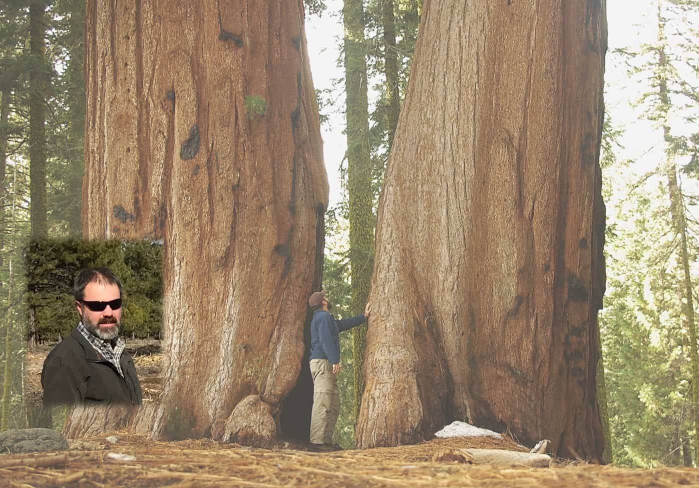 A headshot of Ed Keith imposed on a landscape photo of Ed admiring giant sequoia trees.