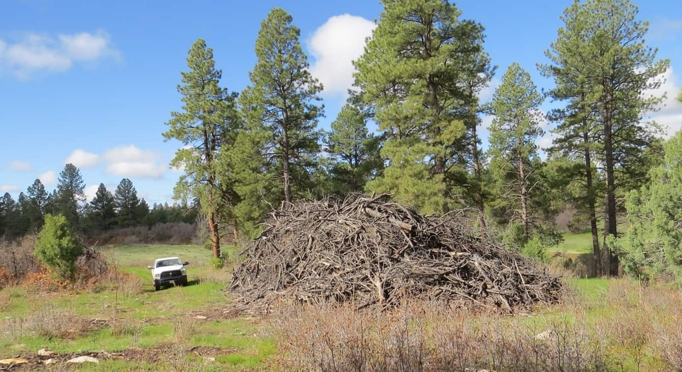 A pickup truck dwarfed by a huge pile of woody debris