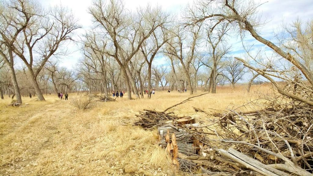 Volunteers piled woody debris to help protect these new Firewise education sites.