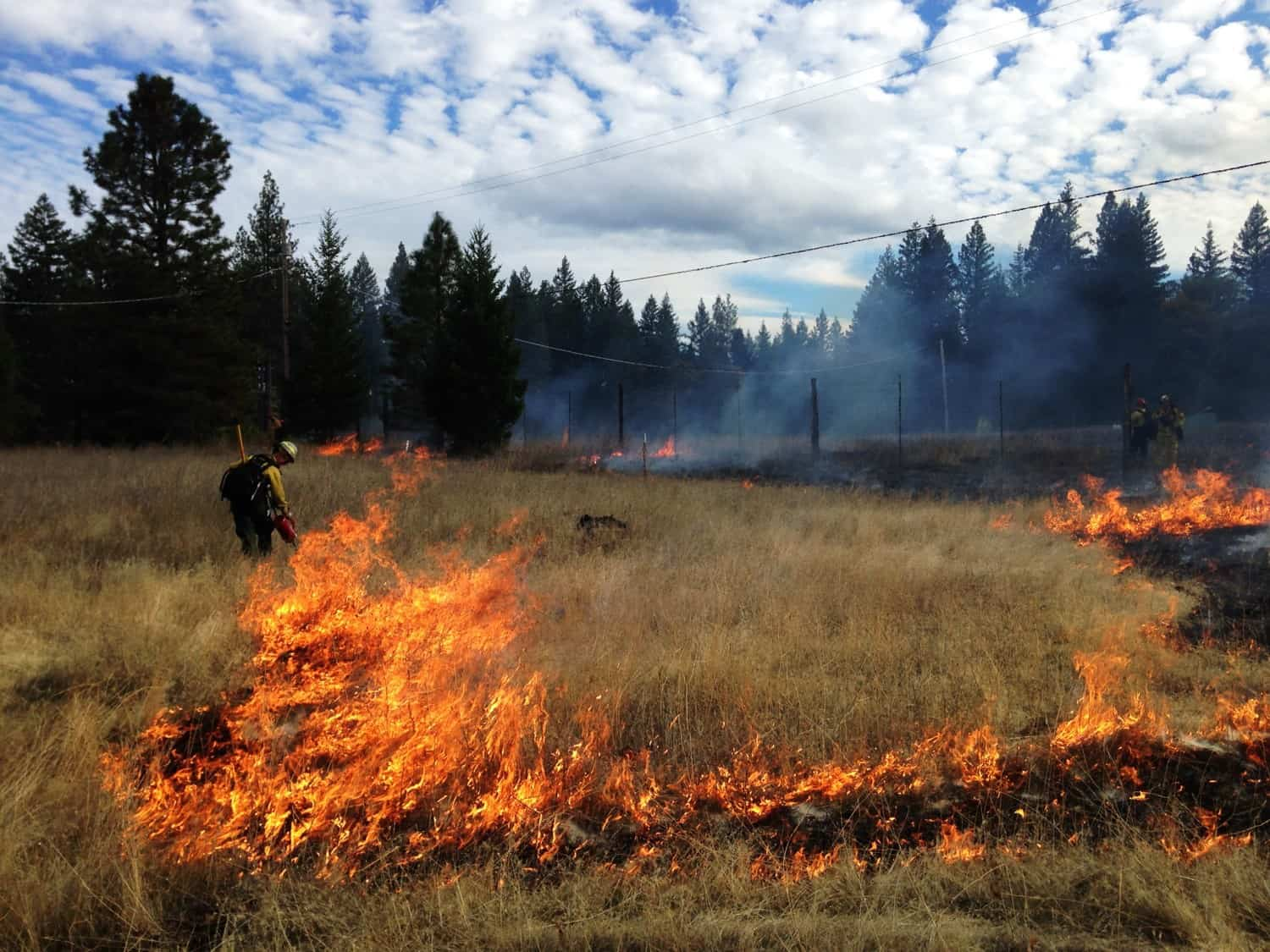 A fire practitioner lighting a controlled burn in a grassland
