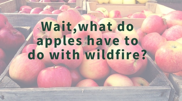 "Apple crates with the following text imposed: ""Wait, what do apples have to do with wildfire?"""