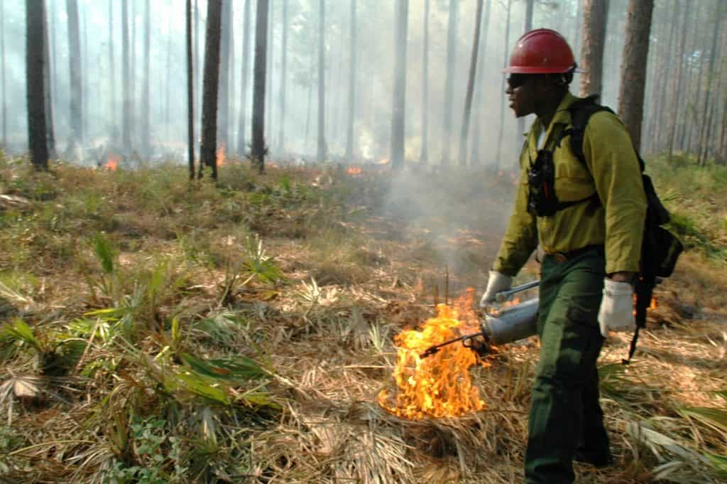 Firefighter carrying a drip torch through a forest in Florida. The relationship between ticks and prescribed fire can be quite variable.