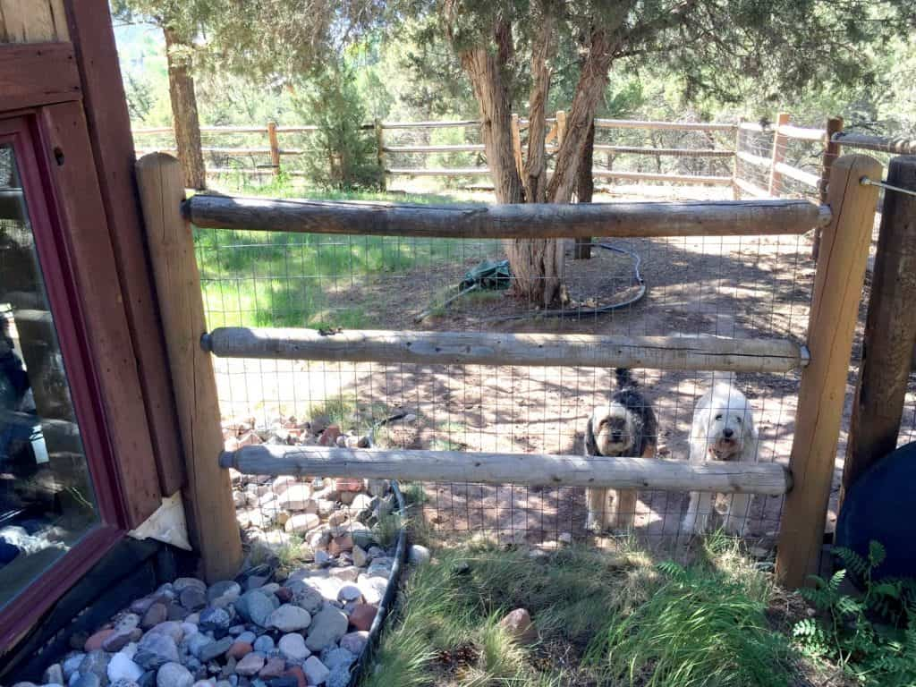 Two dogs enclosed by a wooden fence that touches the home