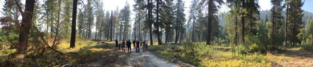Group discussion in the forest