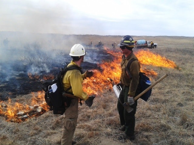 Fire practitioners wearing personal protective equipment while working on a prescribed fire