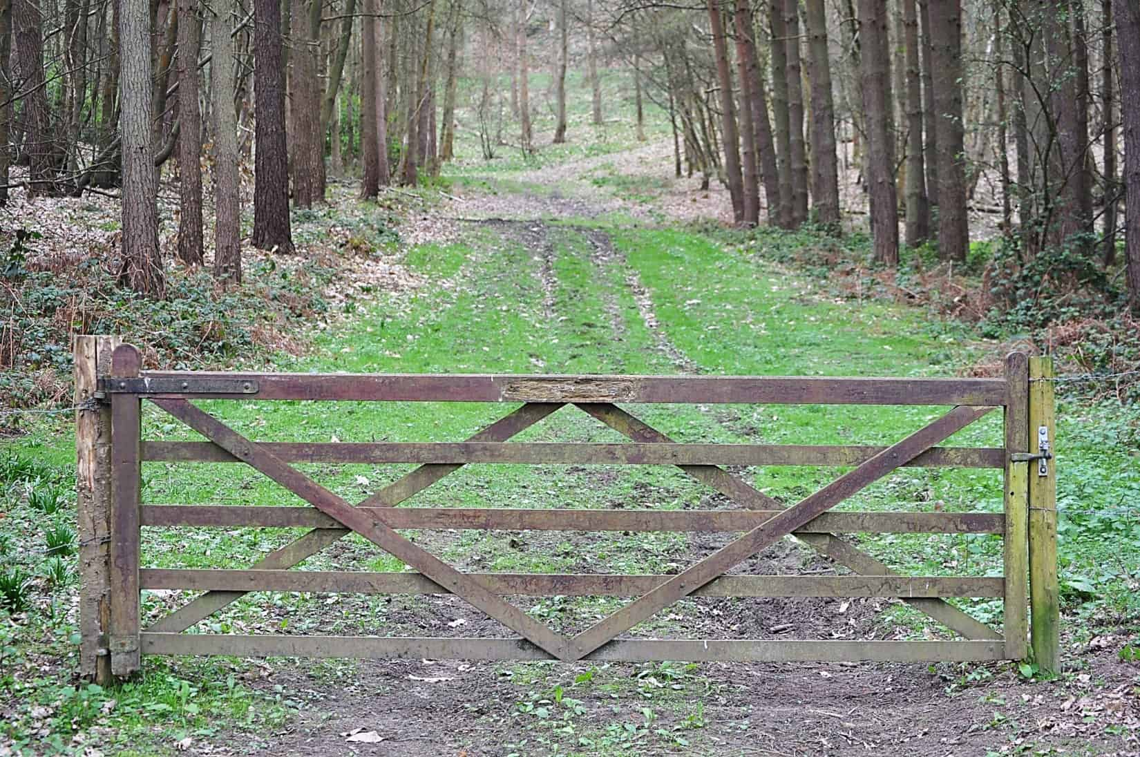 Fenced gravel road through a forest