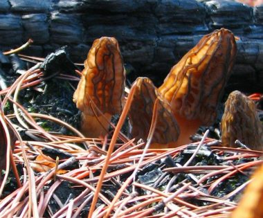 Science Tuesday: Fire Fungus