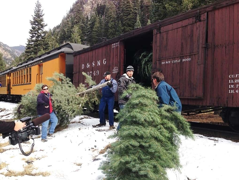 Train personnel and volunteers loading freshly cut trees into a boxcar.