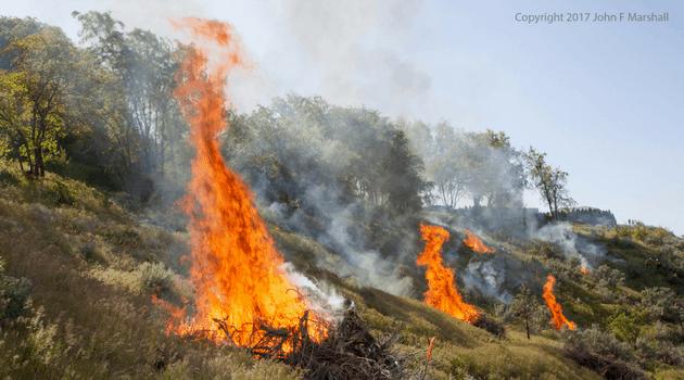 Burn piles on a residential hillside