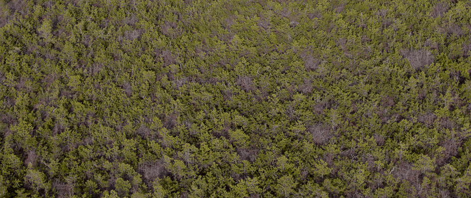 Aerial view of New Jersey Pine Barrens