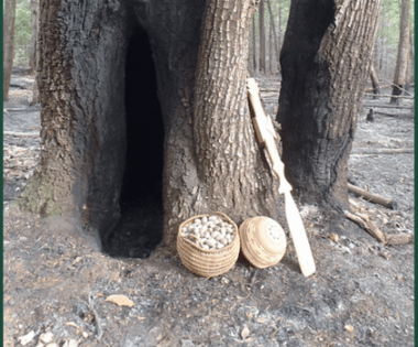 Integrating Traditional Ecological Knowledge and World Renewal Ceremonies into Fire Adaptation: An Indigenous Stewardship Model