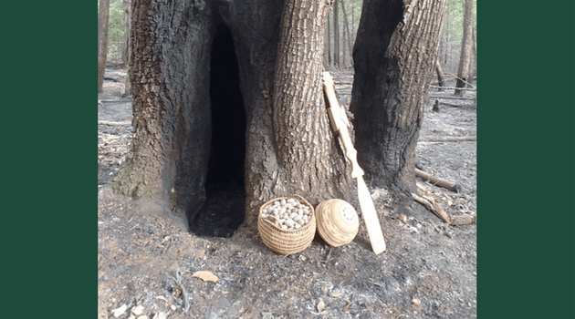 """A California-hazel-stem basket holding tanoak acorns along with a Karuk woman's """"work"""" basket cap and an acorn cooking paddle. A recently burned tree cavity provides the backdrop."""