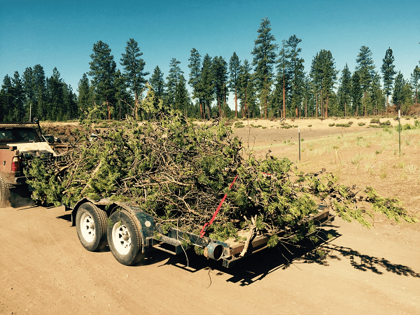 Trailer full of woody debris; FireFree is one of Project Wildfire's ways to advance FAC work