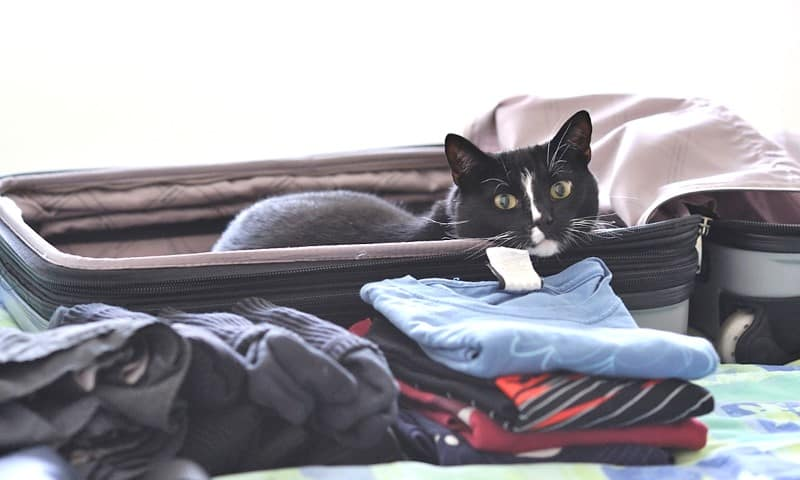 Cat in a packed suitcase