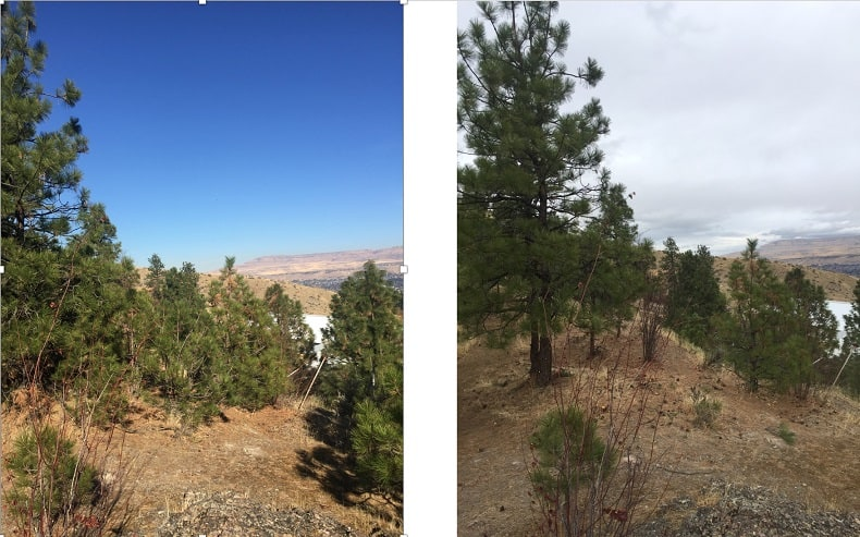 Side by side photos of the same landscape, with the one on the right having less conifer saplings present