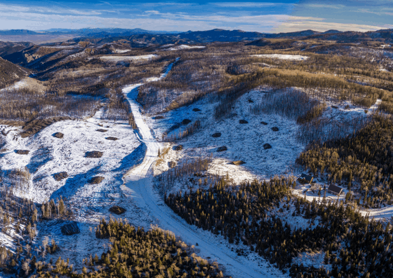 Aerial view of a snowy forest that contains some live trees, some standing dead trees, and some piles of burned timber