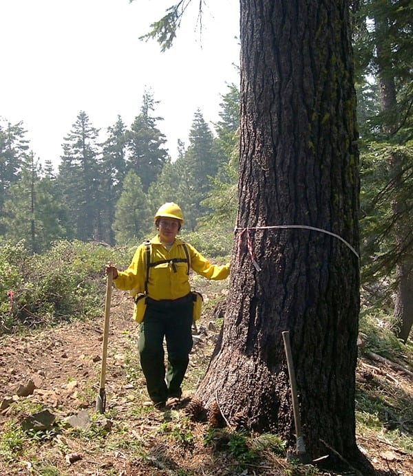 A fire practitioner next to a large conifer