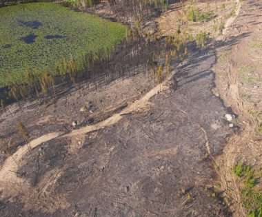 Does Wildfire Mitigation Work? 16 Examples and Counting!