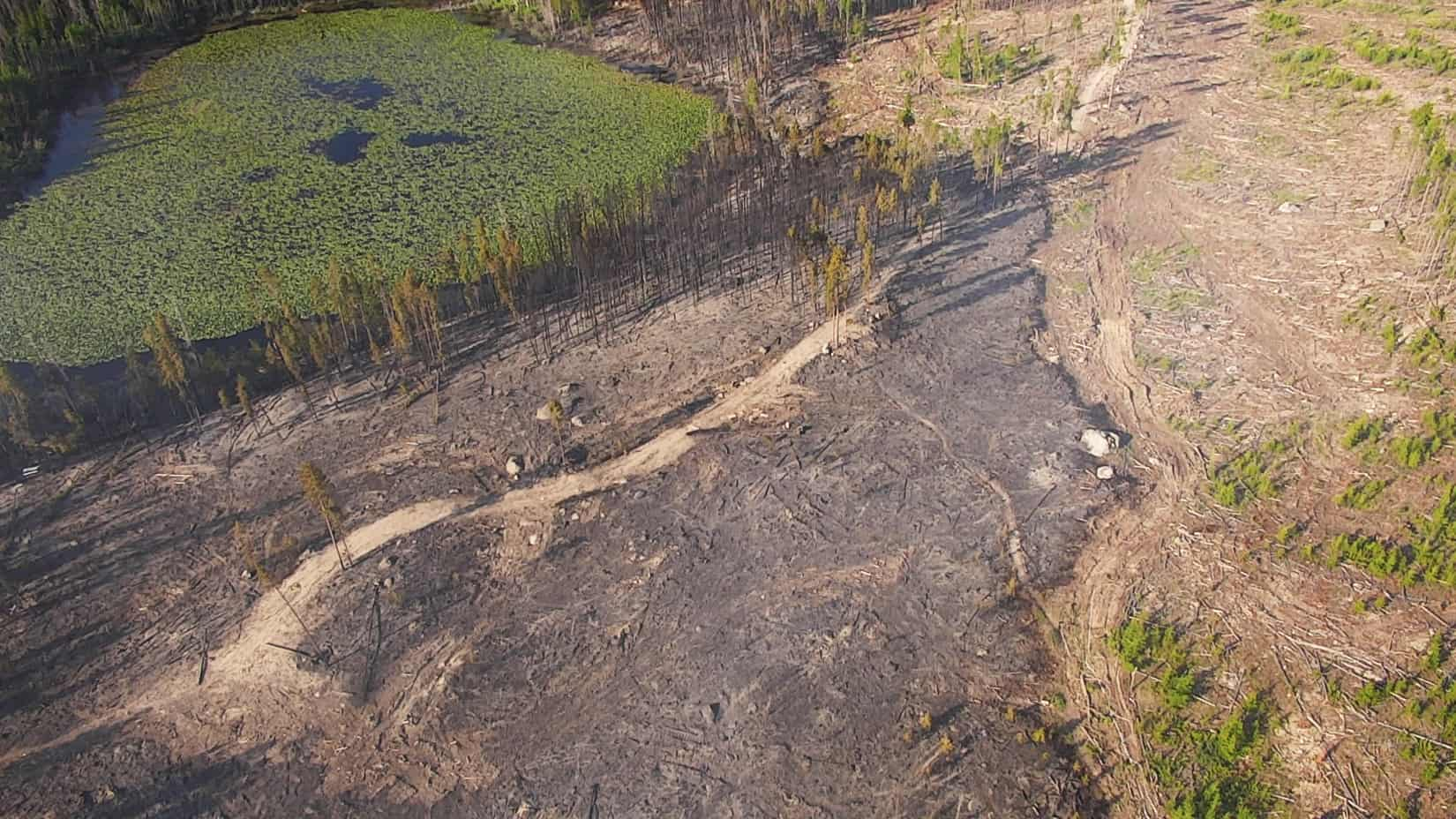 Aerial view of a landscape that was partially burned. The boundary of the burn coincides with the edge of a forest stand that was previously thinned.