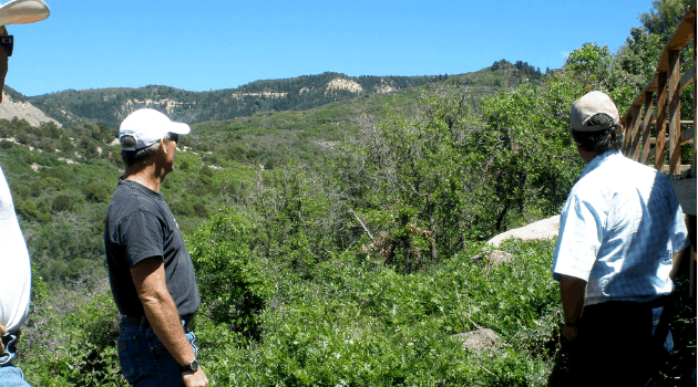 People looking out on a thickly forested, high wildfire risk landscape