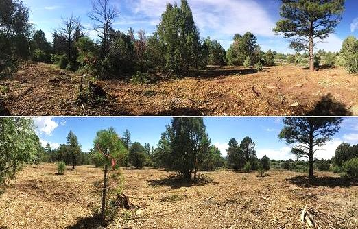 Two photos of the same landscape. The before photo has significantly more woody debris and forest fuels present