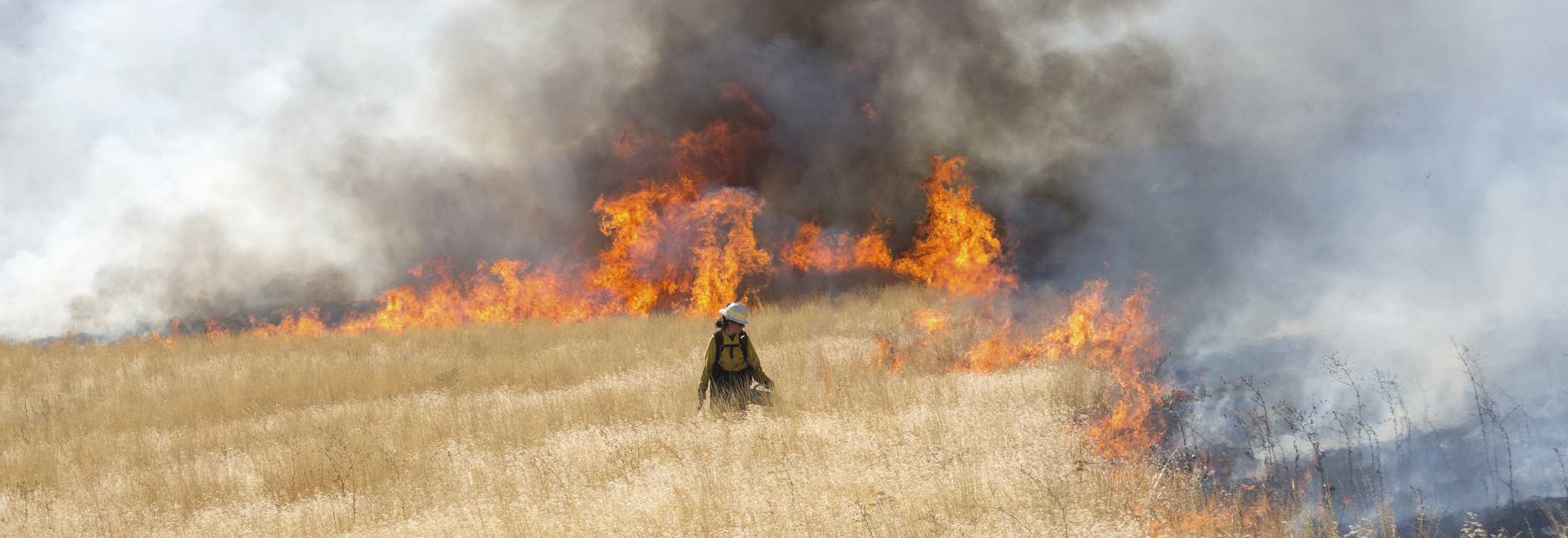 Fire practitioner walking through a field, with burning grass to her left