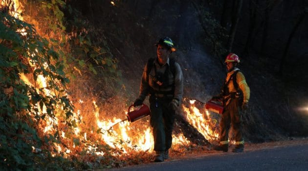 Two prescribed fire practitioners using driptorches to ignite vegetation along a road