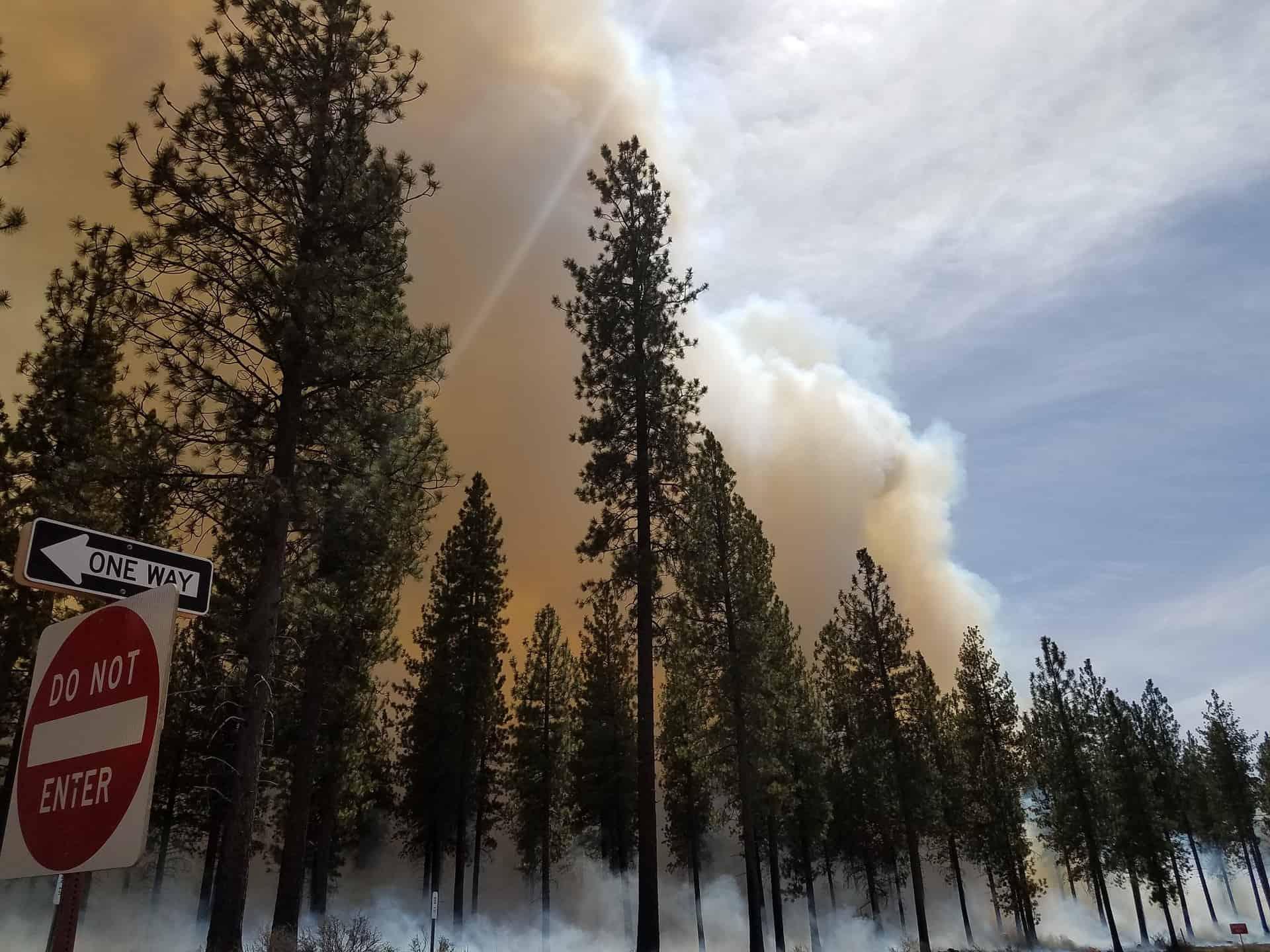 Smoke rising above tall conifers