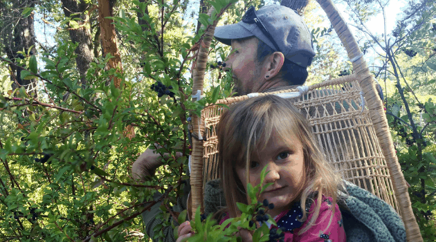 Indigenous practitioner gathering huckleberries while carrying his child in a hazel-stick baby basket