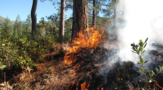 Prescribed fire in Whiskeytown National Recreation Area