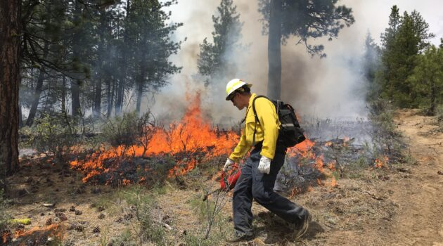 Firefighter using tools to battle a prescribed fire in a forest