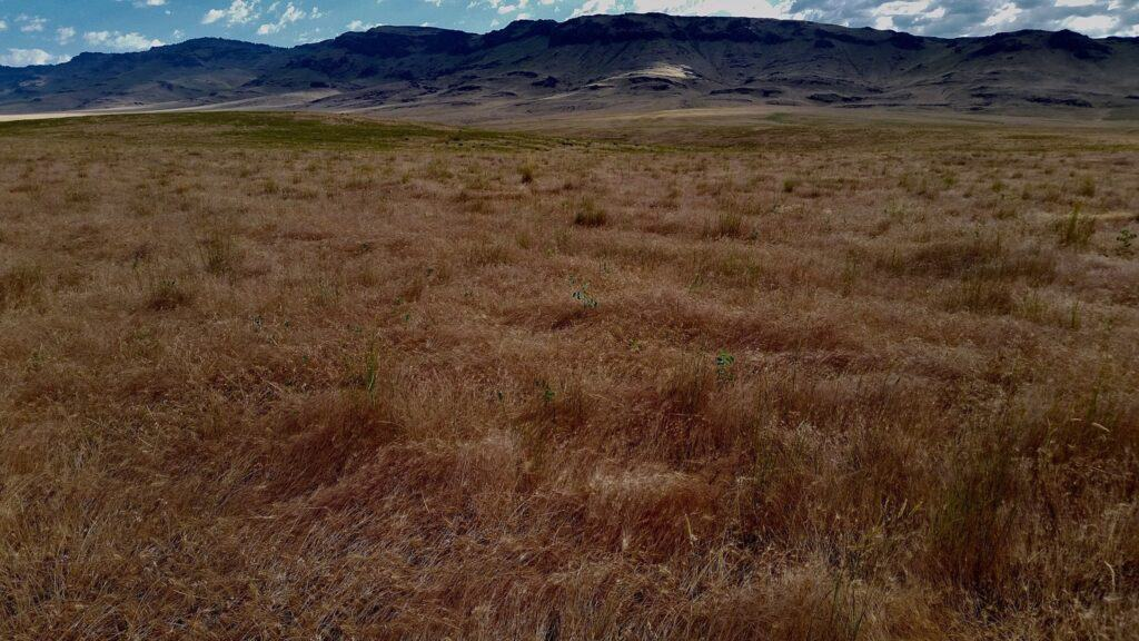 Rangeland with grass and mountains in the background